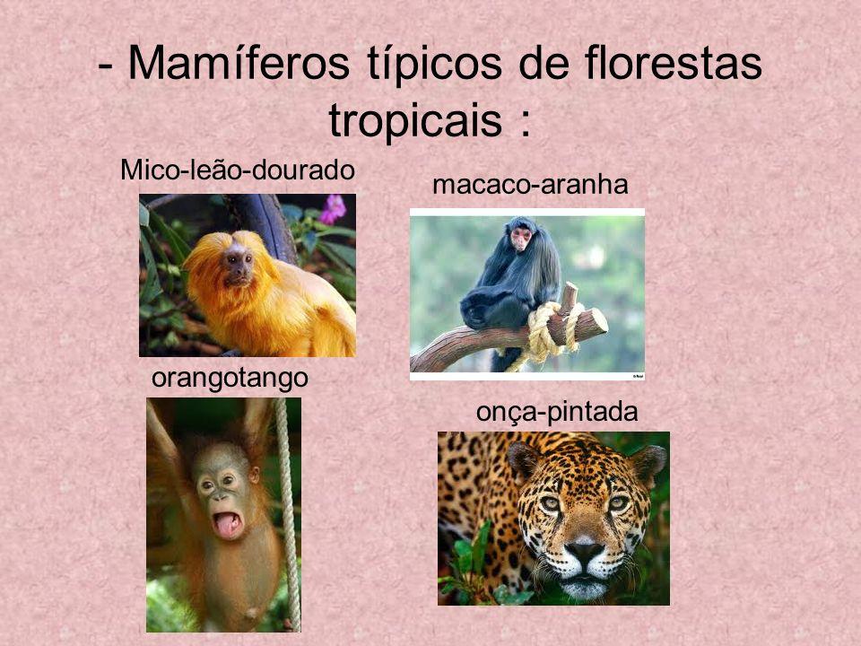 - Mamíferos típicos de florestas tropicais : macaco-aranha Mico-leão-dourado orangotango onça-pintada