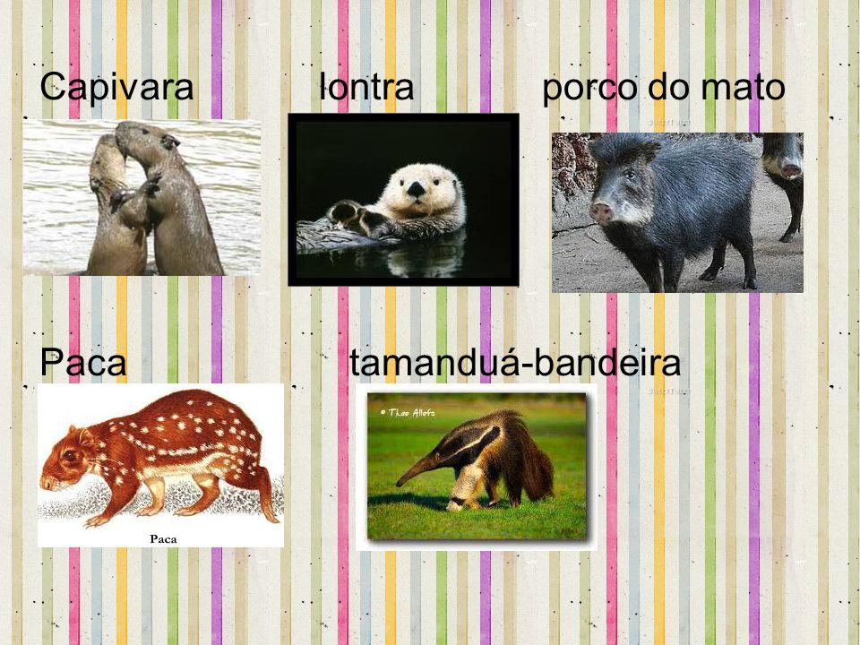 Capivara lontra porco do mato Paca tamanduá-bandeira