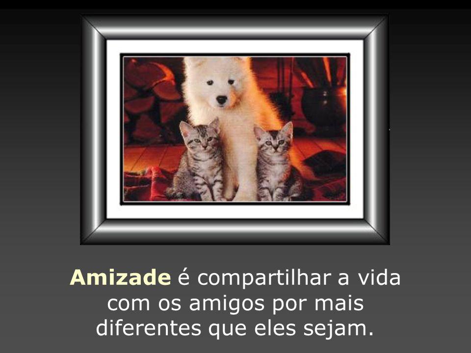Amizade é compartilhar a vida com os amigos por mais diferentes que eles sejam.