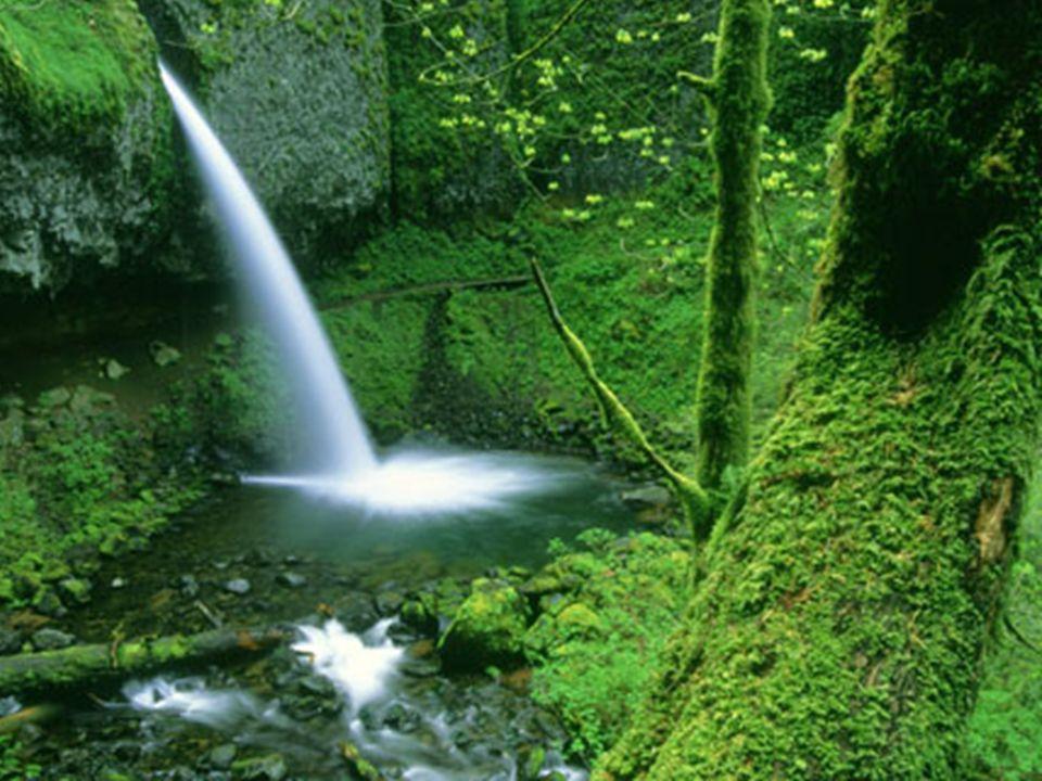 Sinta-se parte da natureza…