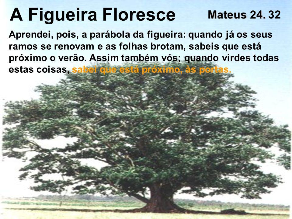 A Figueira Floresce Mateus 24. Mateus 24. 32 Aprendei, pois, a parábola da figueira: quando já os seus ramos se renovam e as folhas brotam, sabeis que