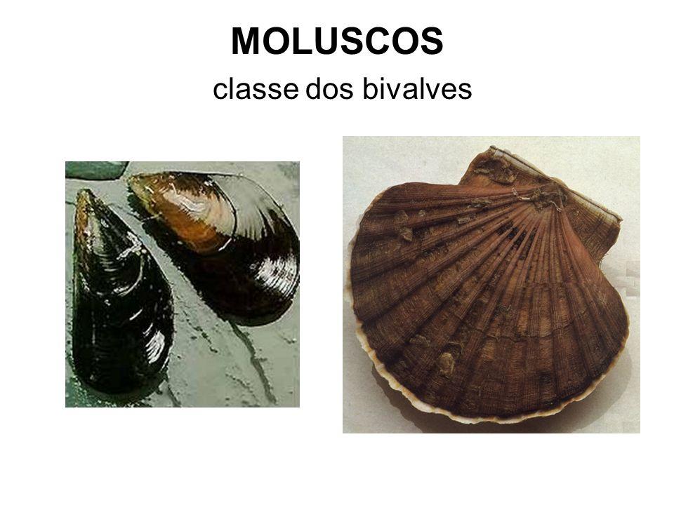 MOLUSCOS classe dos bivalves