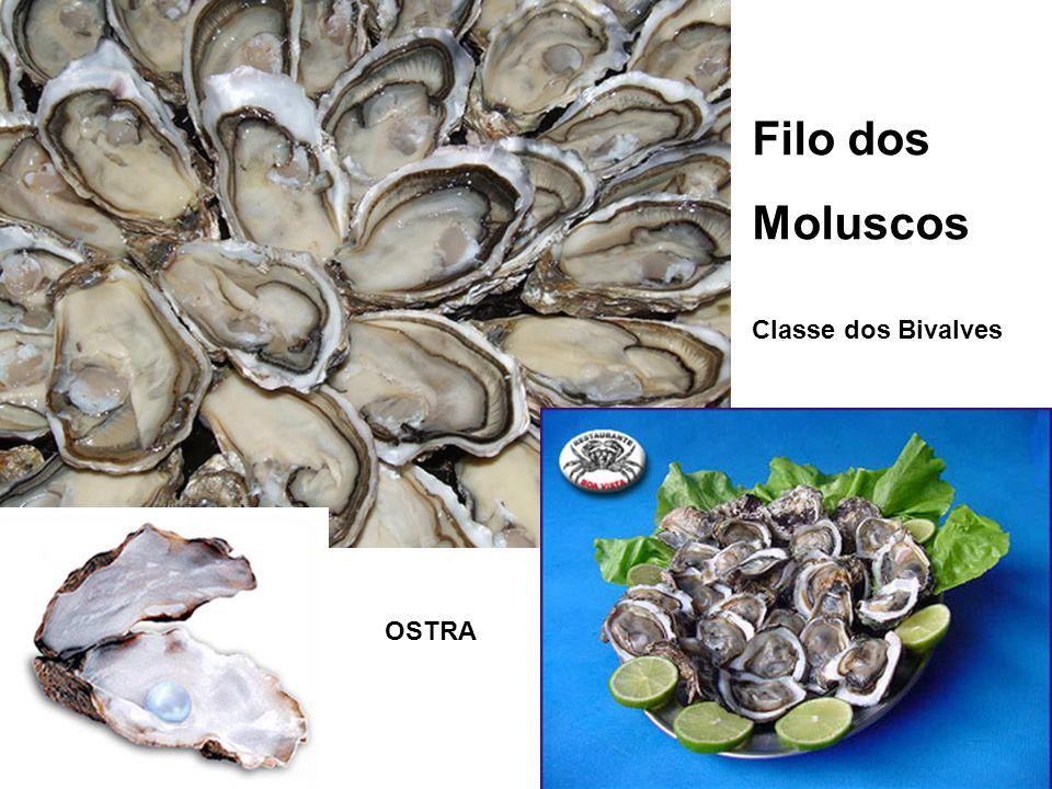 Filo dos Moluscos Classe dos Bivalves OSTRA