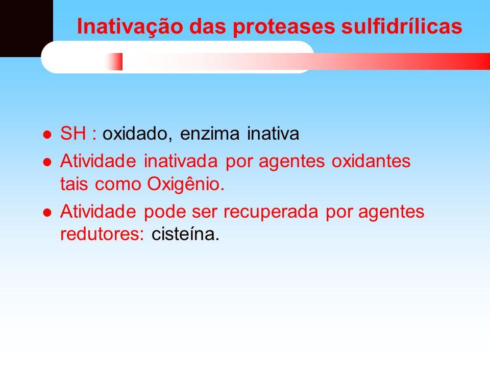 Inativação das proteases sulfidrílicas SH : oxidado, enzima inativa Atividade inativada por agentes oxidantes tais como Oxigênio. Atividade pode ser r