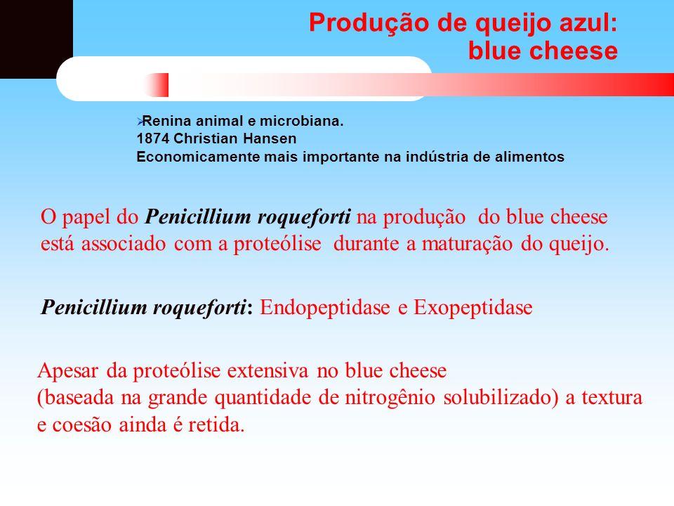 Produção de queijo azul: blue cheese O papel do Penicillium roqueforti na produção do blue cheese está associado com a proteólise durante a maturação