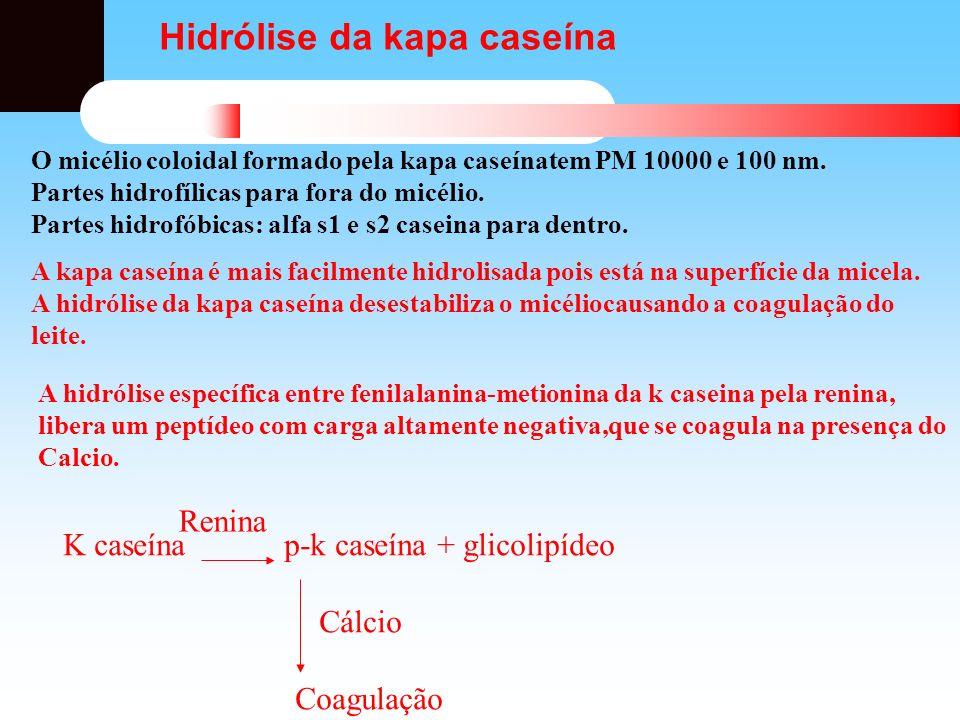 Hidrólise da kapa caseína O micélio coloidal formado pela kapa caseínatem PM 10000 e 100 nm. Partes hidrofílicas para fora do micélio. Partes hidrofób