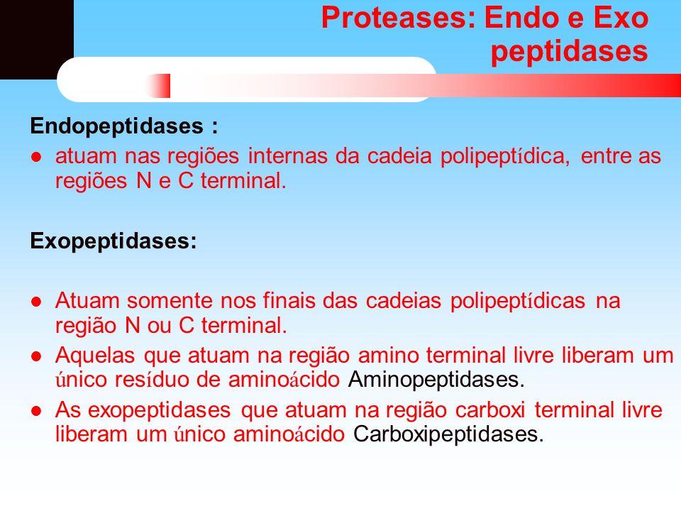 Proteases: Endo e Exo peptidases Endopeptidases : atuam nas regiões internas da cadeia polipept í dica, entre as regiões N e C terminal. Exopeptidases