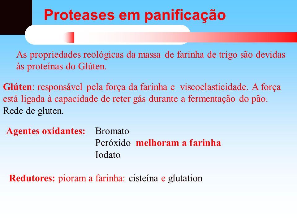 Proteases em panificação As propriedades reológicas da massa de farinha de trigo são devidas às proteínas do Glúten. Glúten: responsável pela força da