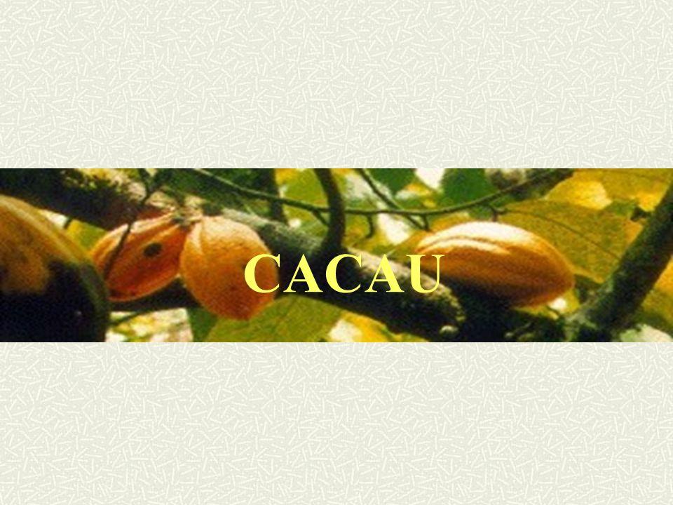 HISTÓRICO O nome científico: theobroma cacao Theo: Deus broma: alimento - Alimento dos Deuses Os Aztecas no México cultivavam o cacaueiro muito antes dos Europeus chegarem na América.