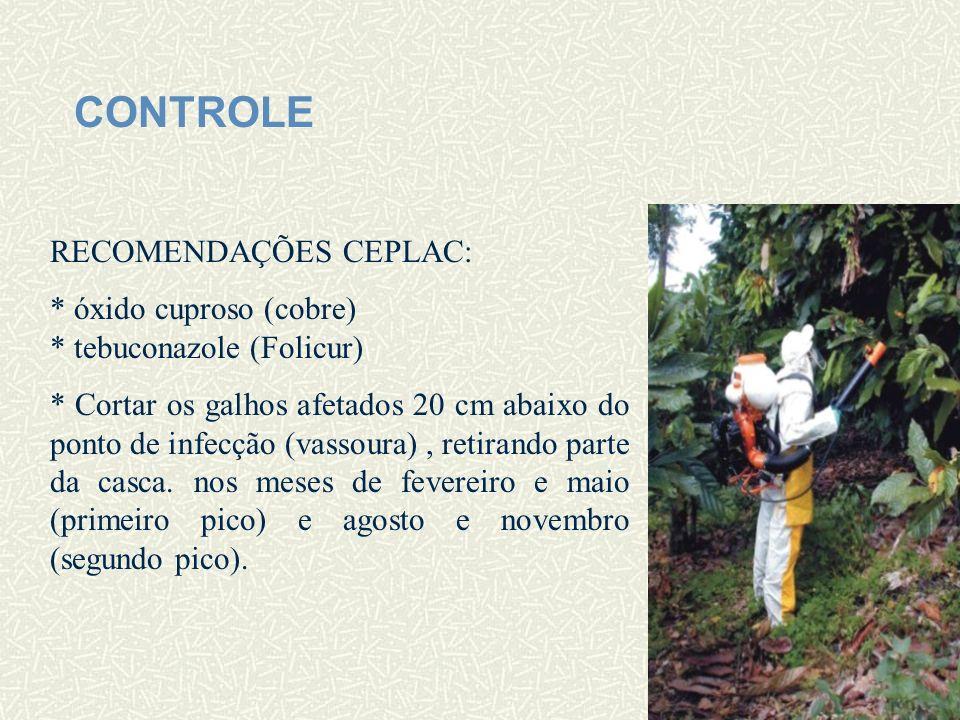 CONTROLE RECOMENDAÇÕES CEPLAC: * óxido cuproso (cobre) * tebuconazole (Folicur) * Cortar os galhos afetados 20 cm abaixo do ponto de infecção (vassour