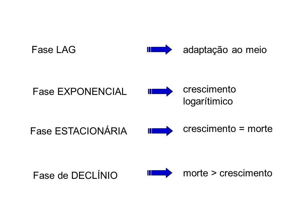 Curva de Crescimento Bacteriano Figura 2