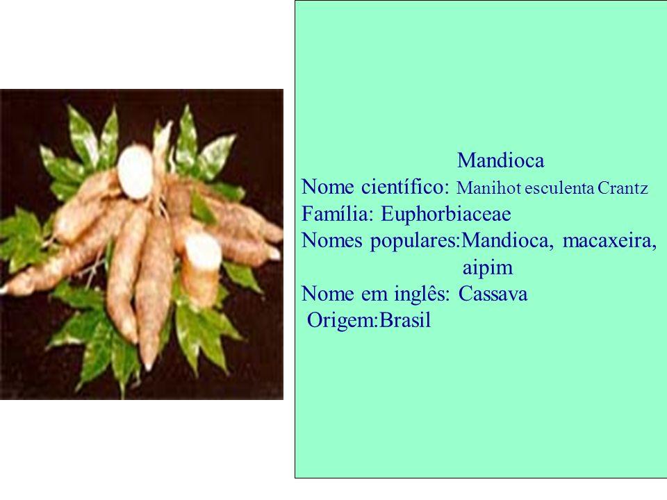Mandioca Nome científico: Manihot esculenta Crantz Família: Euphorbiaceae Nomes populares:Mandioca, macaxeira, aipim Nome em inglês: Cassava Origem:Br