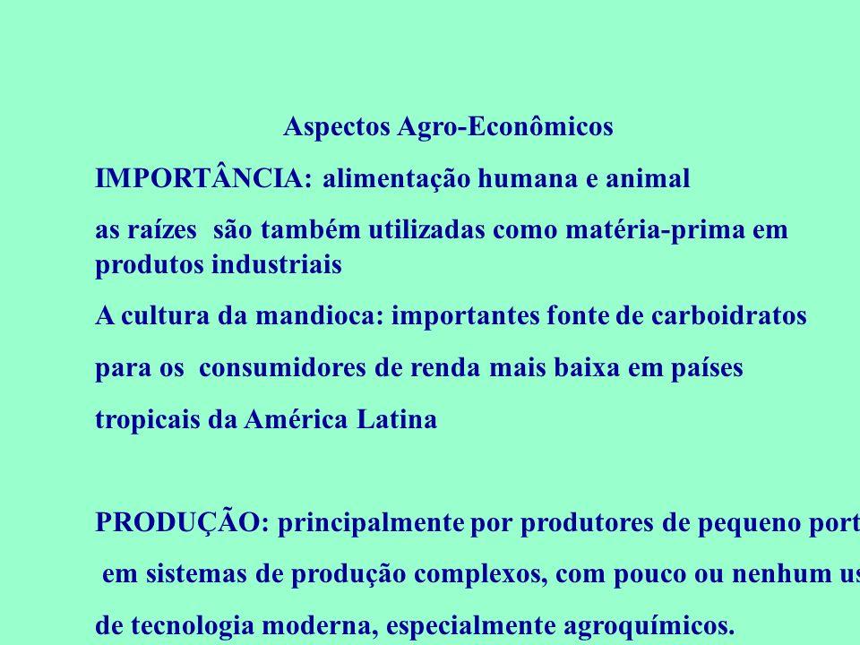 Aspectos Agro-Econômicos IMPORTÂNCIA: alimentação humana e animal as raízes são também utilizadas como matéria-prima em produtos industriais A cultura