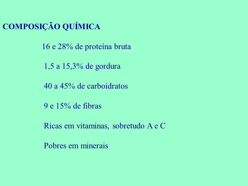 COMPOSIÇÃO QUÍMICA 16 e 28% de proteína bruta 1,5 a 15,3% de gordura 40 a 45% de carboidratos 9 e 15% de fibras Ricas em vitaminas, sobretudo A e C Po
