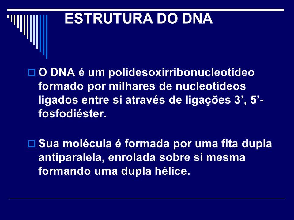 ESTRUTURA DO DNA O DNA é um polidesoxirribonucleotídeo formado por milhares de nucleotídeos ligados entre si através de ligações 3, 5- fosfodiéster. S