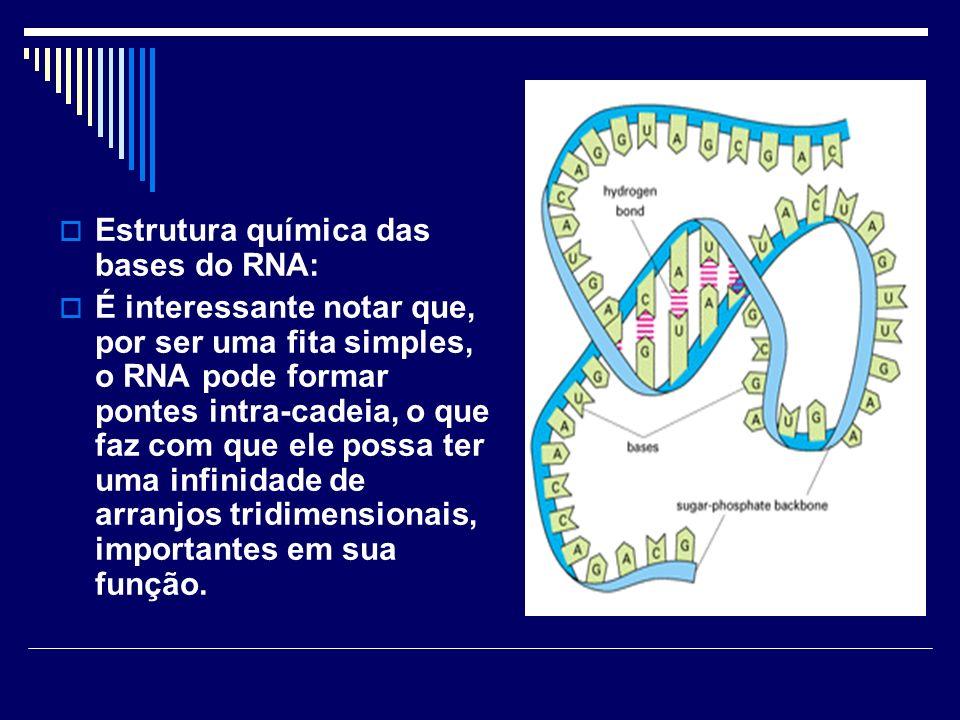 Estrutura química das bases do RNA: É interessante notar que, por ser uma fita simples, o RNA pode formar pontes intra-cadeia, o que faz com que ele p