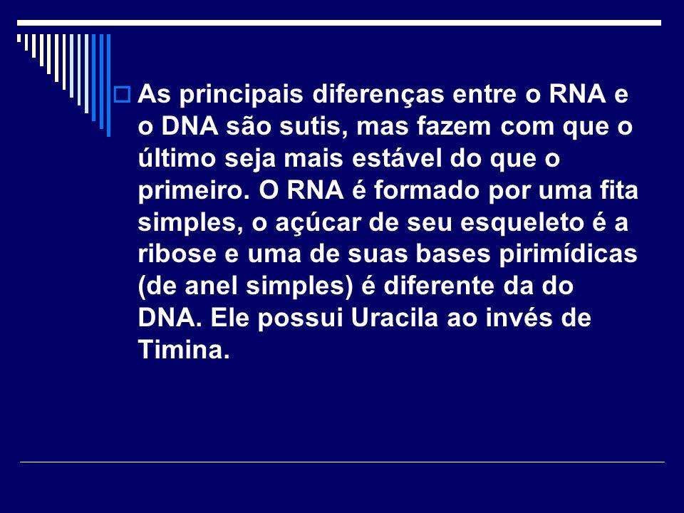 As principais diferenças entre o RNA e o DNA são sutis, mas fazem com que o último seja mais estável do que o primeiro. O RNA é formado por uma fita s