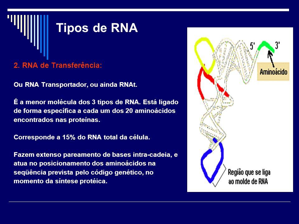 Tipos de RNA 2. RNA de Transferência: Ou RNA Transportador, ou ainda RNAt. É a menor molécula dos 3 tipos de RNA. Está ligado de forma específica a ca