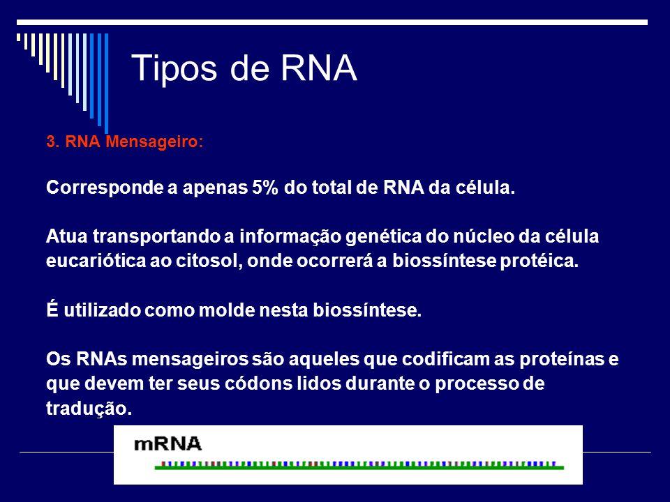 Tipos de RNA 3. RNA Mensageiro: Corresponde a apenas 5% do total de RNA da célula. Atua transportando a informação genética do núcleo da célula eucari