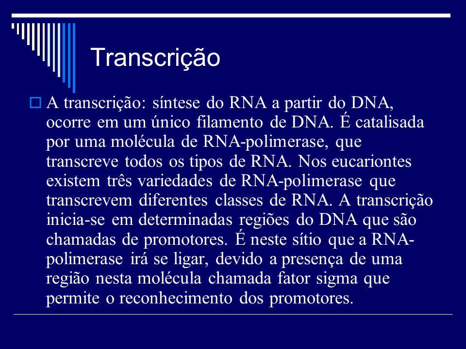 Transcrição A transcrição: síntese do RNA a partir do DNA, ocorre em um único filamento de DNA. É catalisada por uma molécula de RNA-polimerase, que t