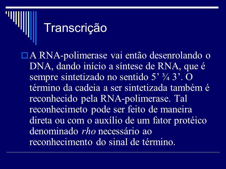 Transcrição A RNA-polimerase vai então desenrolando o DNA, dando início a síntese de RNA, que é sempre sintetizado no sentido 5 ¾ 3. O término da cade