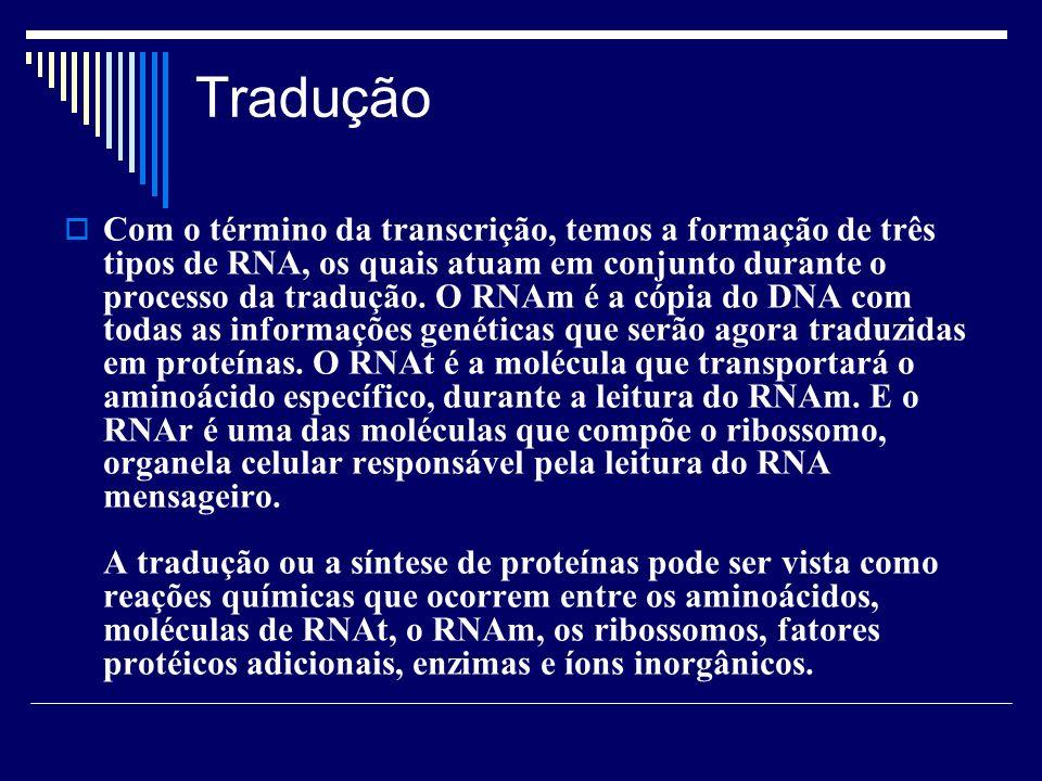 Tradução Com o término da transcrição, temos a formação de três tipos de RNA, os quais atuam em conjunto durante o processo da tradução. O RNAm é a có