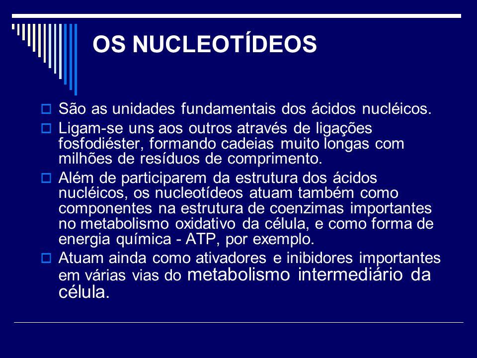 OS NUCLEOTÍDEOS São as unidades fundamentais dos ácidos nucléicos. Ligam-se uns aos outros através de ligações fosfodiéster, formando cadeias muito lo