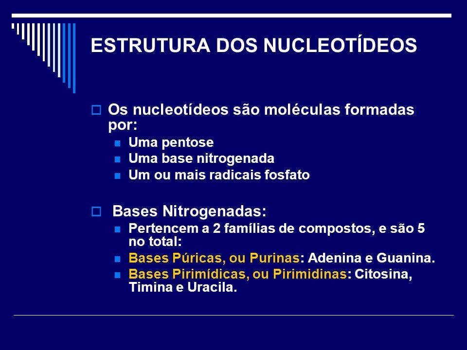 ESTRUTURA DOS NUCLEOTÍDEOS Os nucleotídeos são moléculas formadas por: Uma pentose Uma base nitrogenada Um ou mais radicais fosfato Bases Nitrogenadas