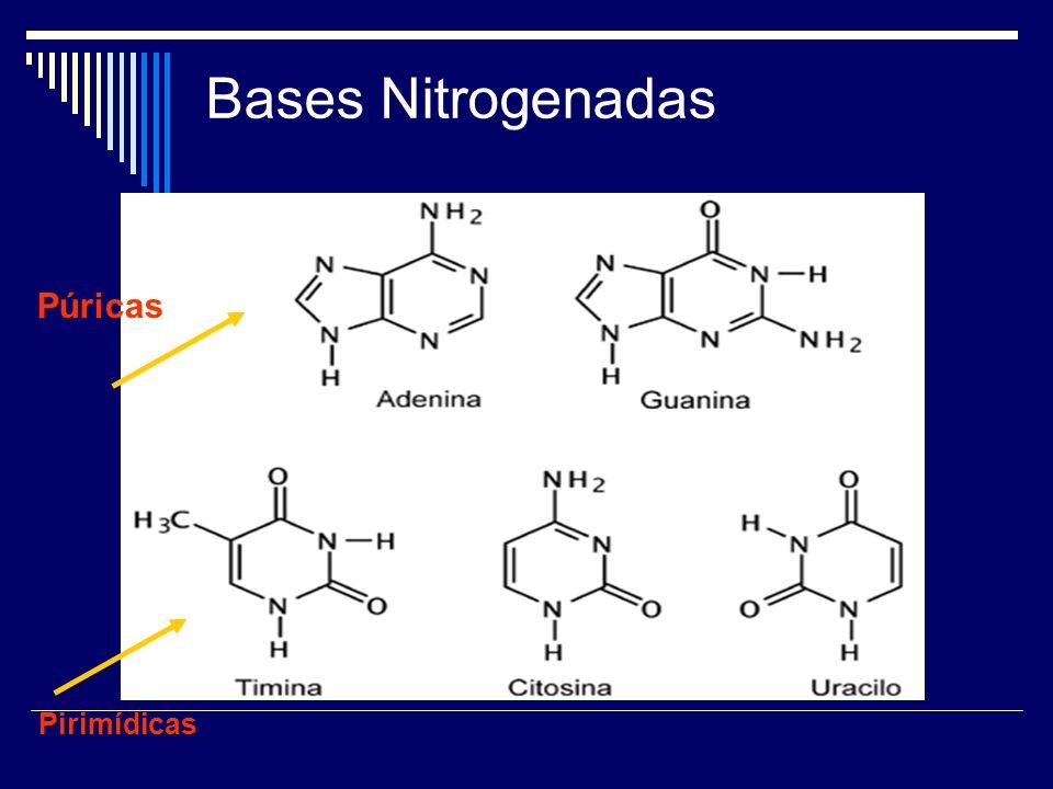 Bases Nitrogenadas Pirimídicas Púricas