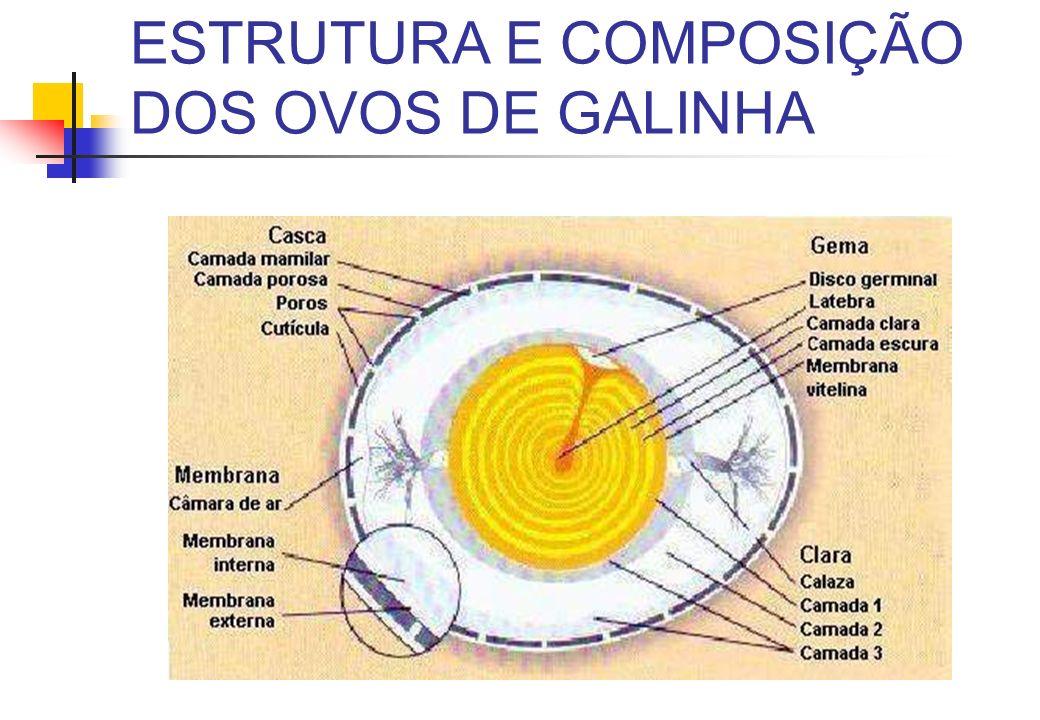 ESTRUTURA E COMPOSIÇÃO DOS OVOS DE GALINHA