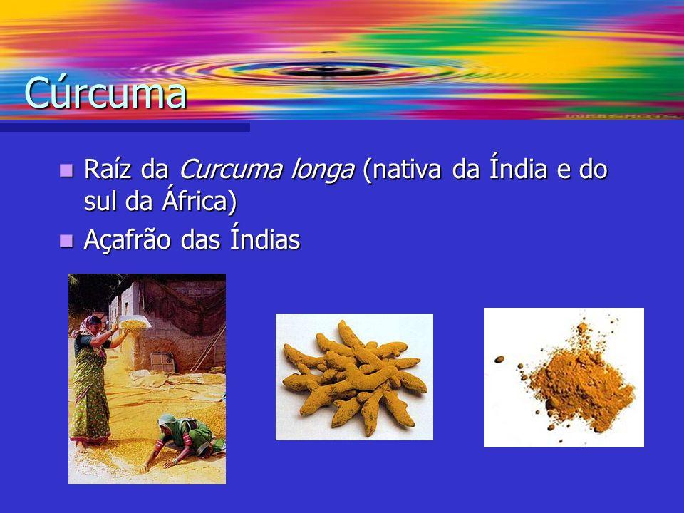 Raíz da Curcuma longa (nativa da Índia e do sul da África) Raíz da Curcuma longa (nativa da Índia e do sul da África) Açafrão das Índias Açafrão das Í
