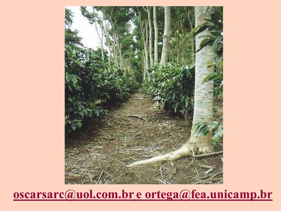 oscarsarc@uol.com.broscarsarc@uol.com.br e ortega@fea.unicamp.br