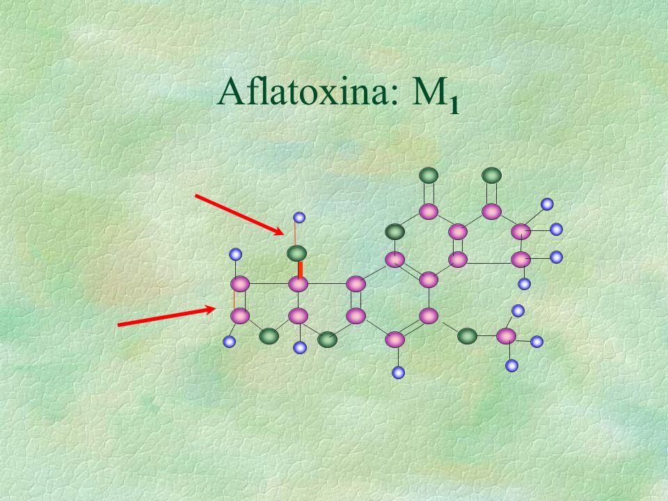 Aflatoxina: M 1