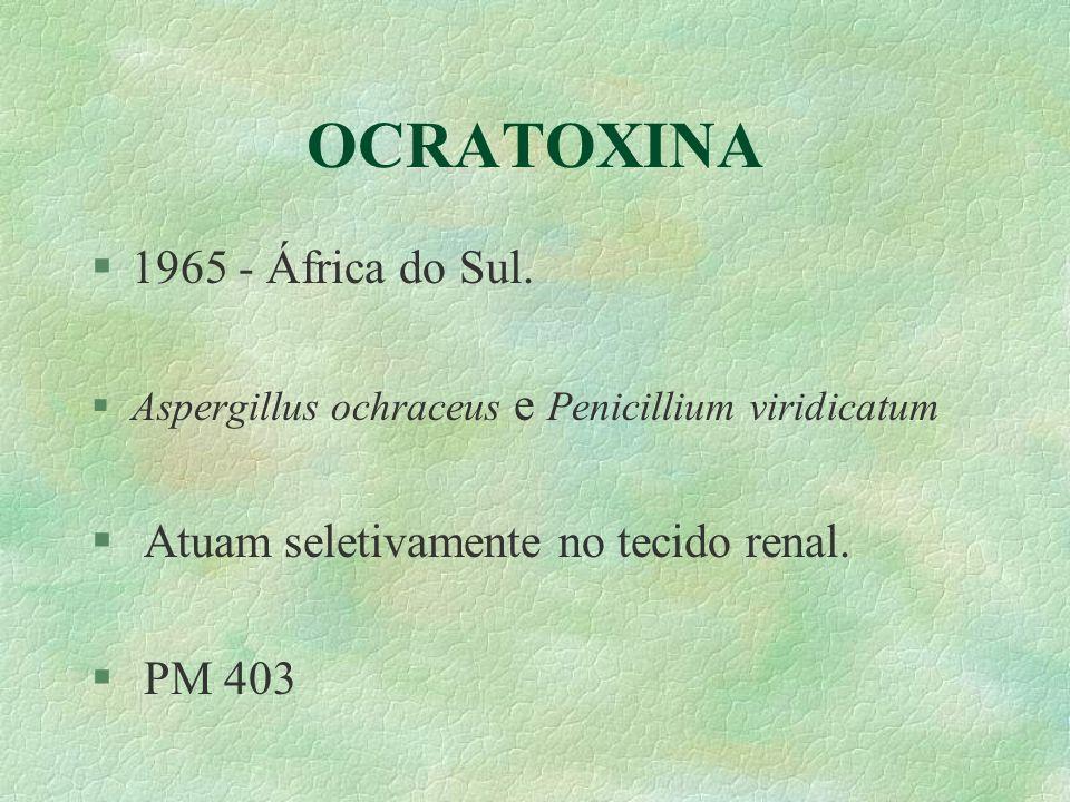 OCRATOXINA §1965 - África do Sul. §Aspergillus ochraceus e Penicillium viridicatum § Atuam seletivamente no tecido renal. § PM 403
