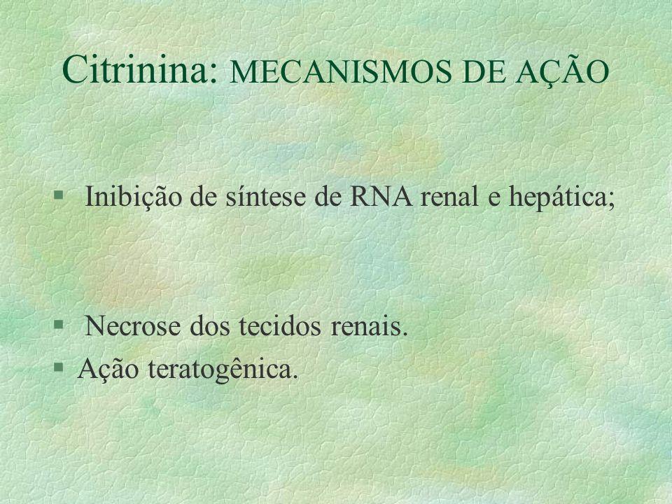 Citrinina: MECANISMOS DE AÇÃO § Inibição de síntese de RNA renal e hepática; § Necrose dos tecidos renais. §Ação teratogênica.
