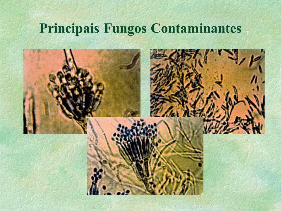Tipos de Micotoxinas § Aflatoxinas ( amendoim, milho e trigo) § Toxinas de Fusarium (DON) (soja, trigo e cevada) § Ocratoxina (café e cevada) § Zearalenona (milho e trigo) § Patulina (soja, milho e maça) § Oosporeia (milho e soja) § Sterigmatocistina (arroz e cevada) § Fumonisina (trigo e arroz) è + de 100 compostos tóxicos.