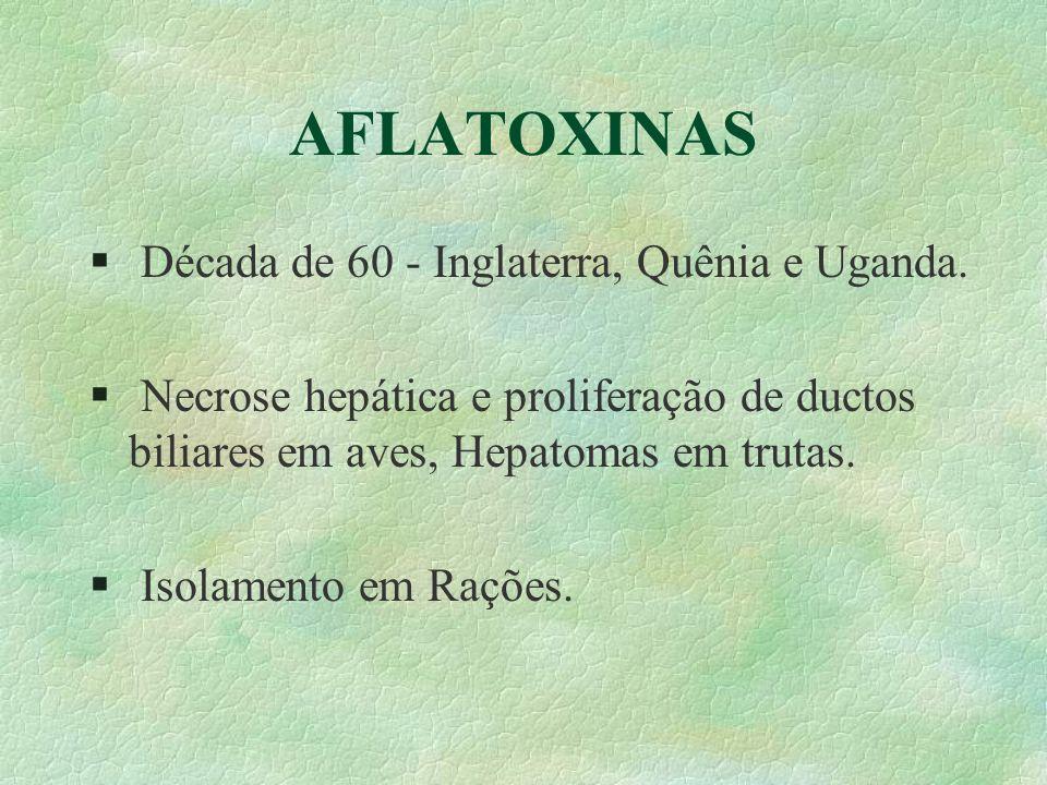AFLATOXINAS §Cromatografia em camada delgada §Fluorescência §B 1 e B 2 (Azuis) Verdes §G 1 e G 2 (Verdes) §Cultura Pura de Aspergillus flavus §Confirmados por ensaios biológicos.