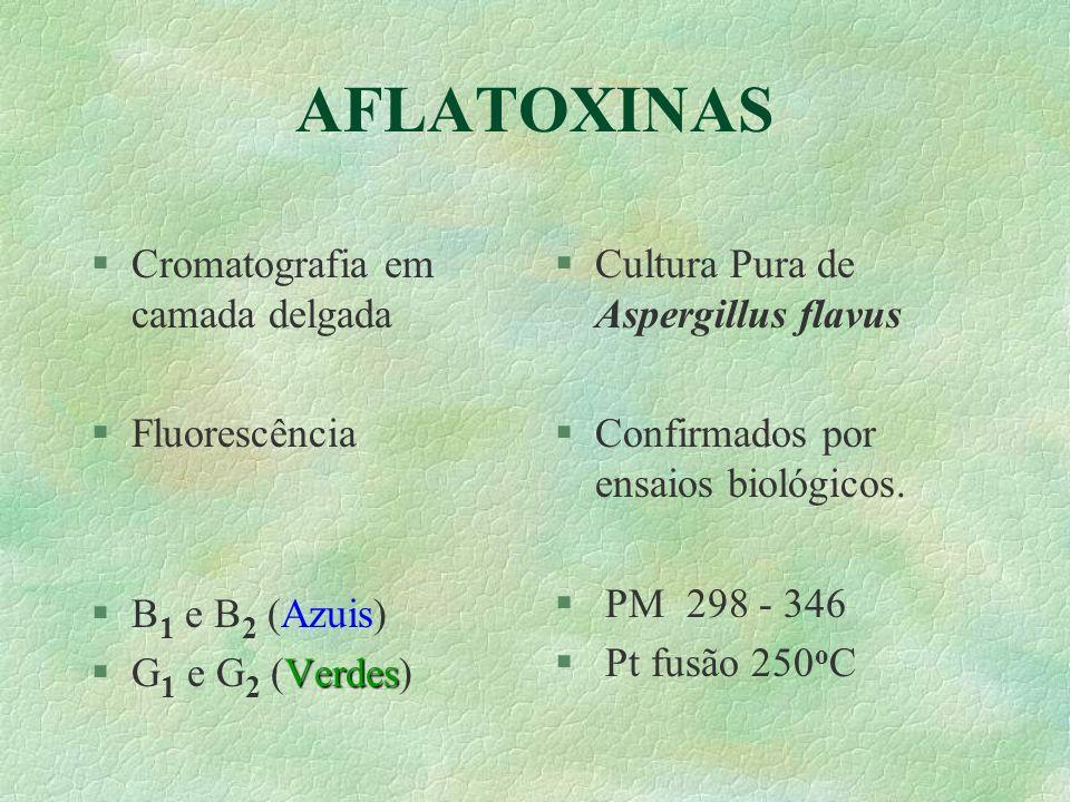 AFLATOXINAS §Cromatografia em camada delgada §Fluorescência §B 1 e B 2 (Azuis) Verdes §G 1 e G 2 (Verdes) §Cultura Pura de Aspergillus flavus §Confirm