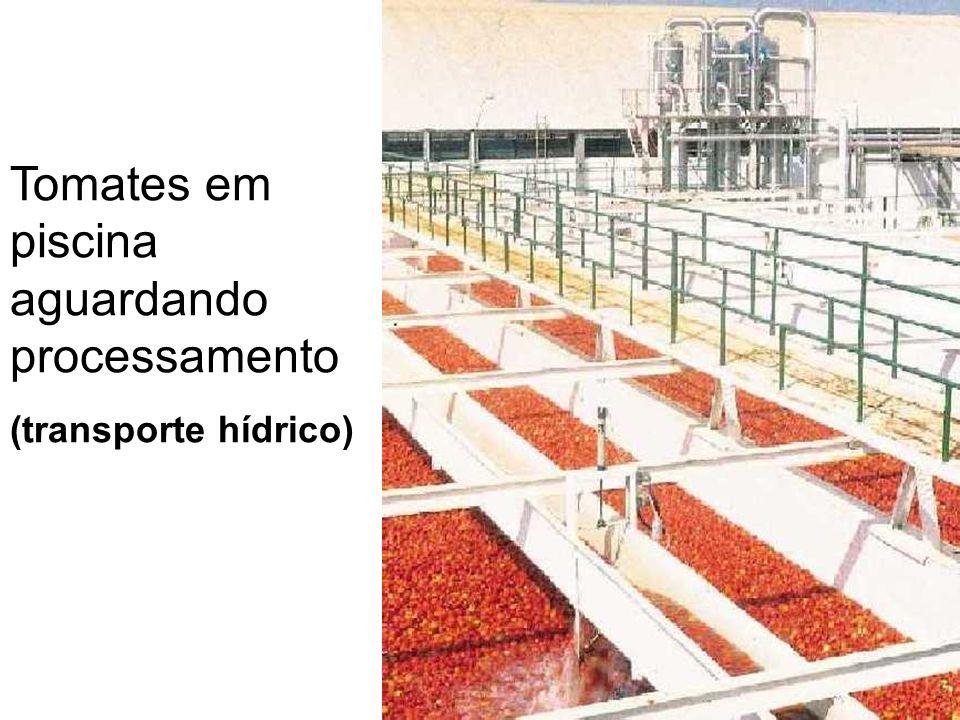 Tomates em piscina aguardando processamento (transporte hídrico)