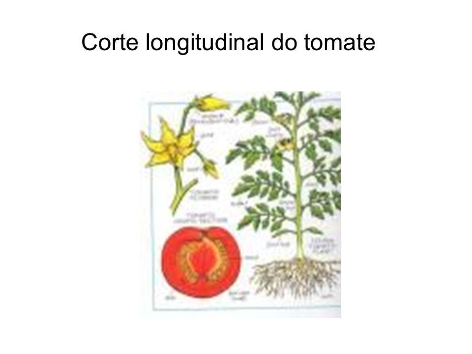 Corte transversal do tomate