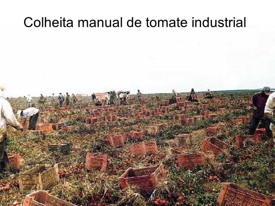 Concentrador de tomate de quatro efeitos (circulação forçada)