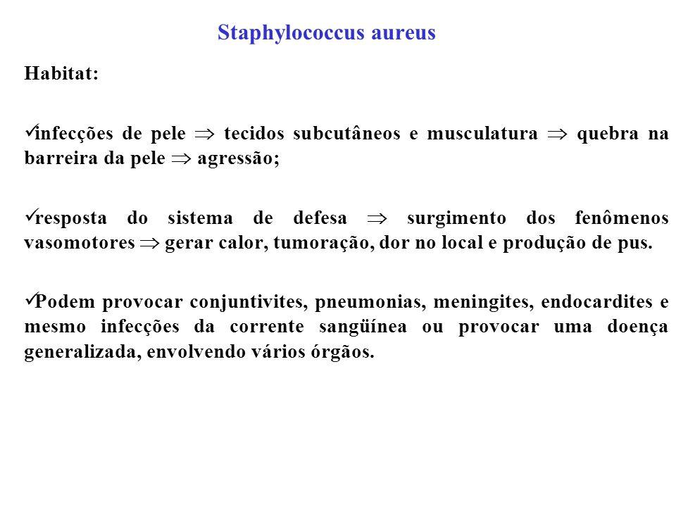 Staphylococcus aureus Habitat: infecções de pele tecidos subcutâneos e musculatura quebra na barreira da pele agressão; resposta do sistema de defesa