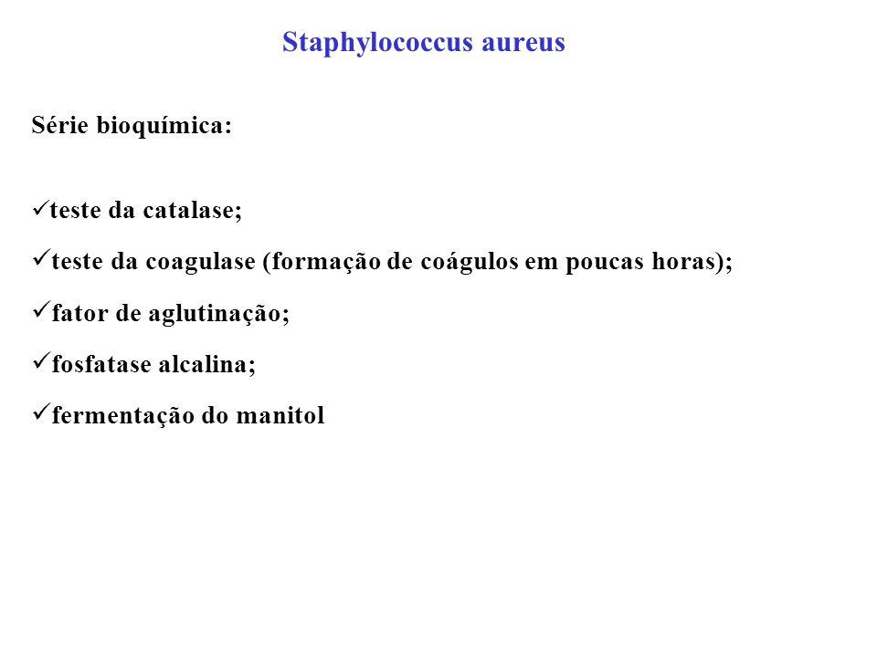 Staphylococcus aureus Série bioquímica: teste da catalase; teste da coagulase (formação de coágulos em poucas horas); fator de aglutinação; fosfatase