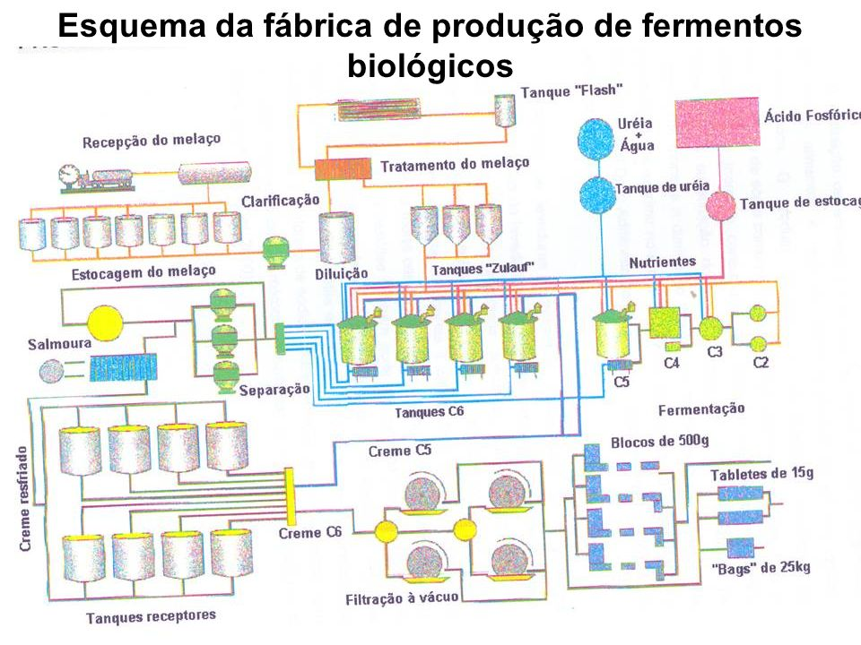Detalhes da multiplicação do fermento biológico