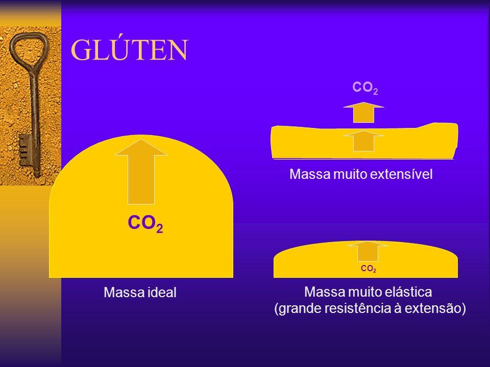 GLÚTEN CO 2 Massa muito elástica (grande resistência à extensão) CO 2 Massa ideal Massa muito extensível CO 2