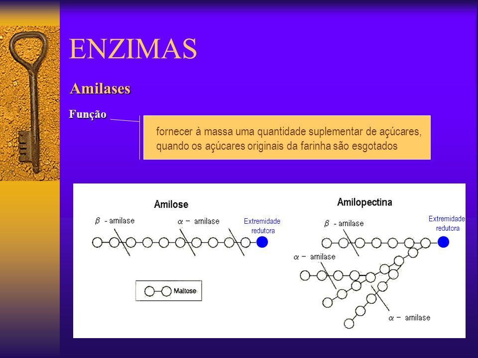 Amilases Função fornecer à massa uma quantidade suplementar de açúcares, quando os açúcares originais da farinha são esgotados Extremidade redutora Ex