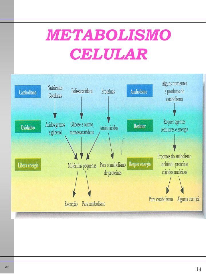 14 WF METABOLISMO CELULAR CAMPBELL. Bioquímica. 3 ed. p. 396