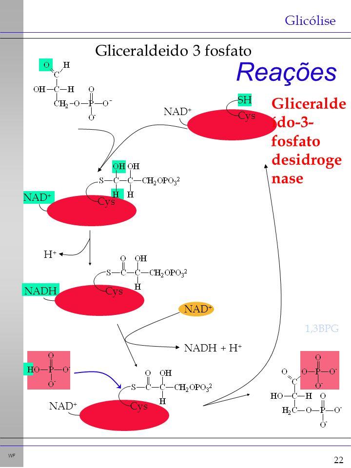 22 WF Reações Glicólise - NAD + NADH + H + 1,3BPG Cys NAD + SH Gliceralde ído-3- fosfato desidroge nase Cys NAD + CysNADH H+H+ CysNAD + Gliceraldeido 3 fosfato