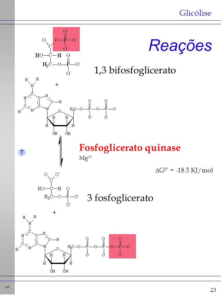23 WF Reações Glicólise + + Fosfoglicerato quinase G 0 = -18.5 KJ/mol Mg 2+ 7 1,3 bifosfoglicerato 3 fosfoglicerato
