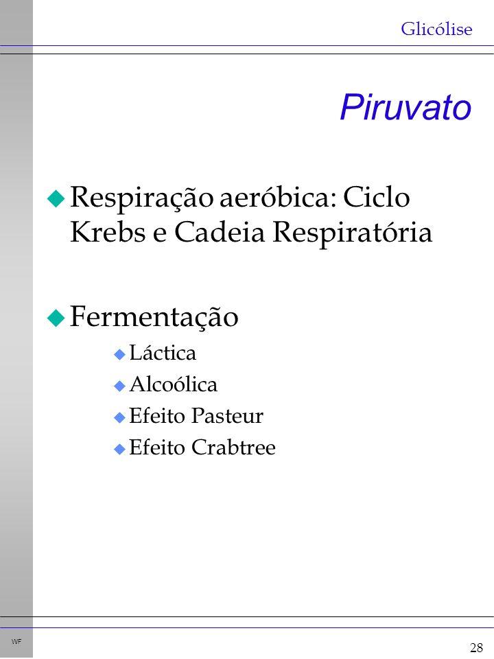 28 WF Piruvato u Respiração aeróbica: Ciclo Krebs e Cadeia Respiratória u Fermentação u Láctica u Alcoólica u Efeito Pasteur u Efeito Crabtree Glicólise